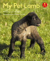 My Pet Lamb