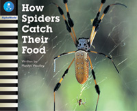 How Spiders Catch Their Food
